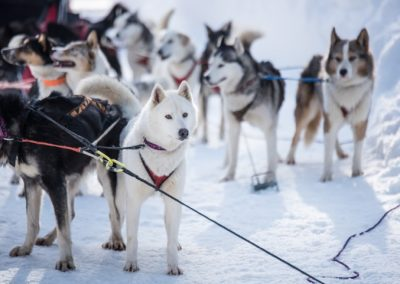 LX-FR-30-Dogsledding-5322